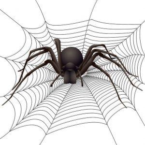 Araña que espera para atrapar su presa para ilustrar una estrategia de precios en traducción