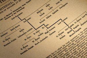 Foto del árbol de lenguas provinientes del indoeuropeo